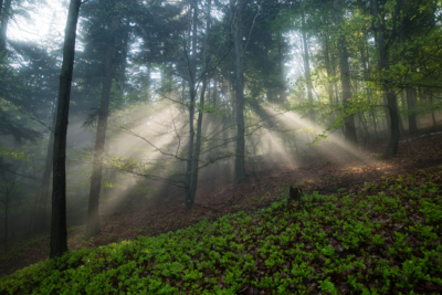 through-the-mist-ii_web