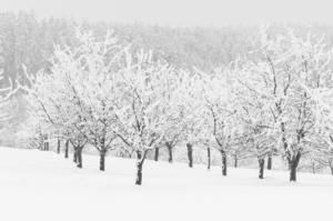 zimni-alej_web