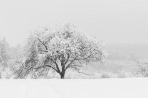 zimni-perina_web